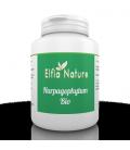 Harpagophytum Bio 400 mg 200 comprimés